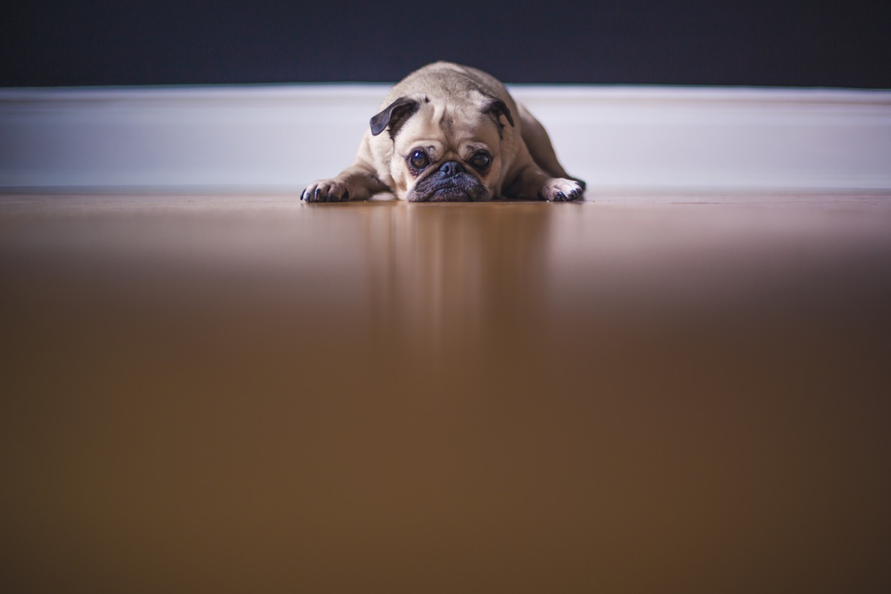 how-to-get-rid-of-dog-smell. '